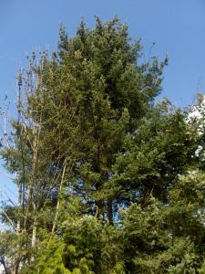 Bird tree.